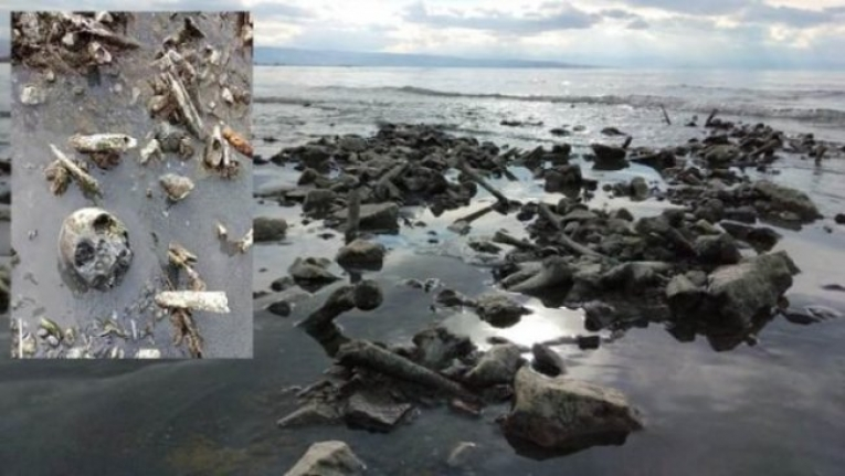 Van Gölü'nde korkunç manzara: Kafatasları ve kemikler kıyıya vurdu