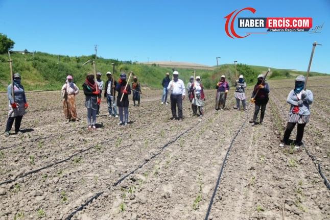 Çiftçi de işçi de çavuş da şikayetçi