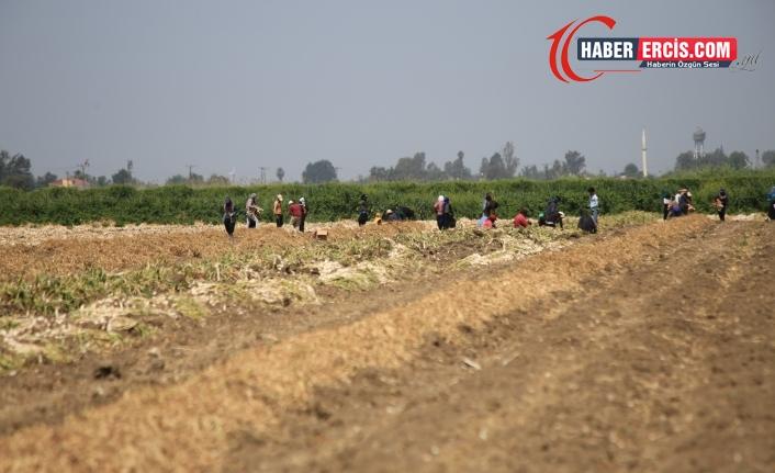 Mevsimlik işçilerin koşulları salgında da değiştirilmedi