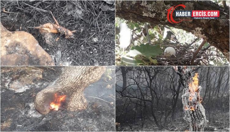 Lice yangınında binlerce canlı hayatını kaybetti