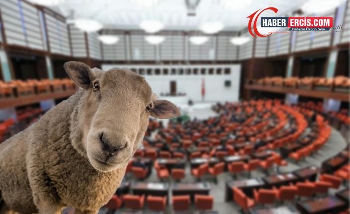 CHP'li Tanal İçişleri Bakanlığına tepki gösterdi: Ya, koyun gözaltına alınır mı?
