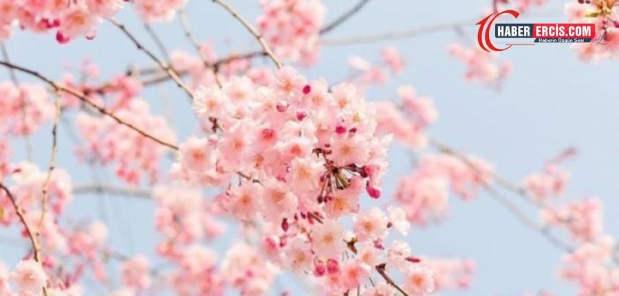Kürtçe Çiçek ne demek? Çiçek Kürtçe anlamı nedir? Kürtçe Çiçek çeşitleri ve isimleri