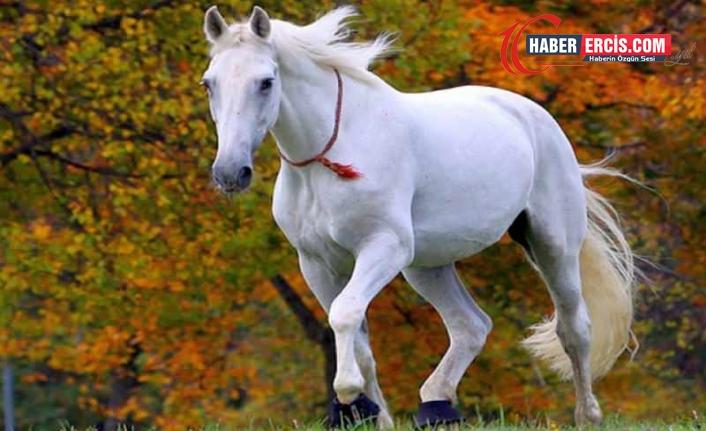 Rüyada At Görmek ne demek? Rüyada At görmek ne anlama gelir? Rüyada ata binmek ne anlama geliyor?