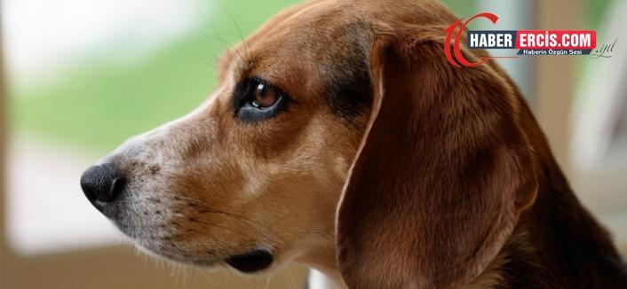 Güney Kore: Köpek eti yemek yasaklanabilir