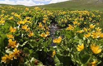 Erciş yaylalarında bahar renkleri