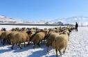 Van'da tarım ve hayvancılık can çekişiyor:...