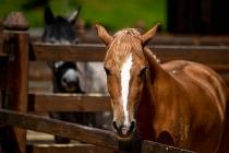 İBB'den 'kayıp atlar' açıklaması: Sorumluluk Dörtyol Belediyesi'ne ait