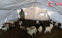 Van'da Depremde telef olan hayvanların bedelleri ödeniyor