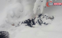 Van-İran sınırında parçalanmış bir cenaze bulundu