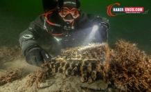 Baltık Denizi'nde Nazilere Ait Enigma Makinesi Bulundu