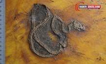 Dünyanın Bilinen En Eski Pitonu Keşfedildi: 47 milyon yaşında!