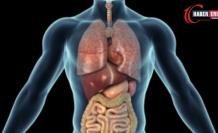 Kürtçe Organ ne demek? Kürtçe Organ İsimleri Nelerdir?