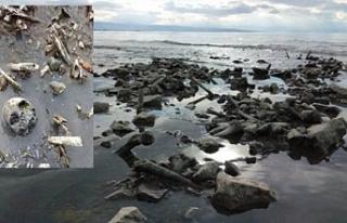 Van Gölü'nde korkunç manzara: Kafatasları...