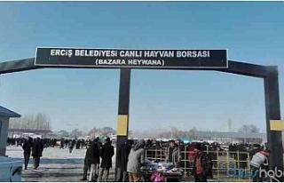Erciş'te hayvan pazarında 1 kişinin öldüğü...