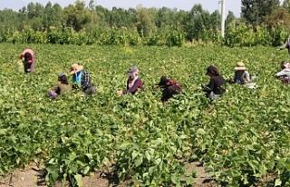 Van'da çiftçi daha ağır bir kriz yaşıyor