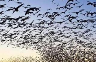 Kürtçe kuş ne demek? Kürtçe kuş isimleri nelerdir?...