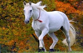 Rüyada At Görmek ne demek? Rüyada At görmek ne...
