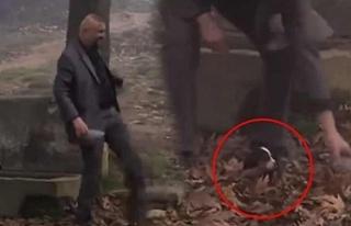 Yavru köpeğe işkence teşhir oldu, görüntüler...