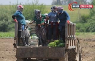 Tarım işçileri 'batıya hizmetçi' kitle...