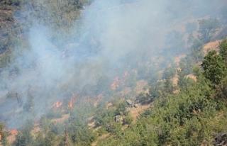 4 kentteki ormanlar alevler içinde