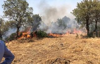 HDP, Şemdinli'deki yangın bölgesinde incelemede...