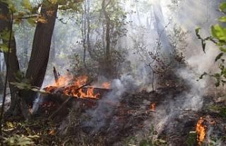 Munzur Vadisi'ndeki yangın büyüyor