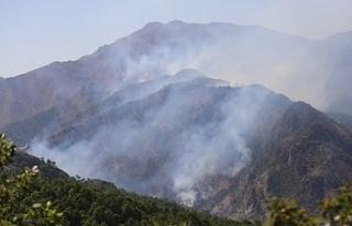 Roj Deresi'ndeki yangına 3 gündür müdahale edilmiyor