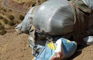 İran askerleri bir kolberi katletti