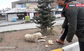Çaldıran Belediyesinden sokak hayvanlarına yiyecek desteği