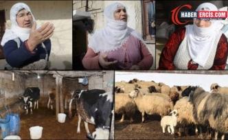 Van'da artan yem fiyatları hayvancılığı etkiliyor