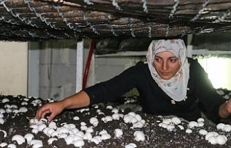 Van'da Kadın emeğiyle sofraya ulaşan mantarlar
