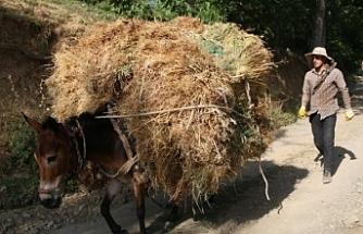 Van'da Kilometrelerce at sırtında ot taşıyorlar