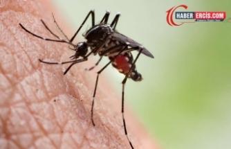 DSÖ: Sıtma 400 bin can aldı