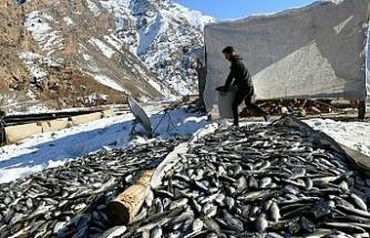 Van'da HES yüzünden tonlarca balık öldü