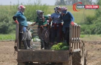 Tarım işçileri 'batıya hizmetçi' kitle olarak görülüyor