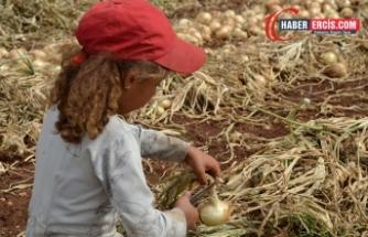 Tarım işçisinin kızı: Babam işsiz kalınca telefonunu sattı, derse katılamadım
