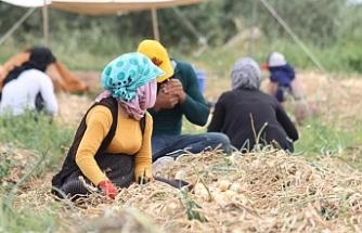 Tarım işçileri: Çalışıyoruz ama bir teneke yağ alamıyoruz