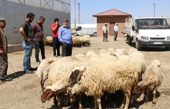 Van'da Yem ve samana zam: Hayvanlarını satışa çıkardılar