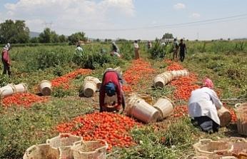 Kobanêli işçilerin 'mevsimlik' çilesi ağırlaştı