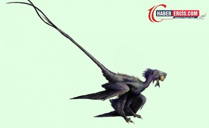 Çin'de Tüylü Bir Dinozor Fosili Keşfedildi