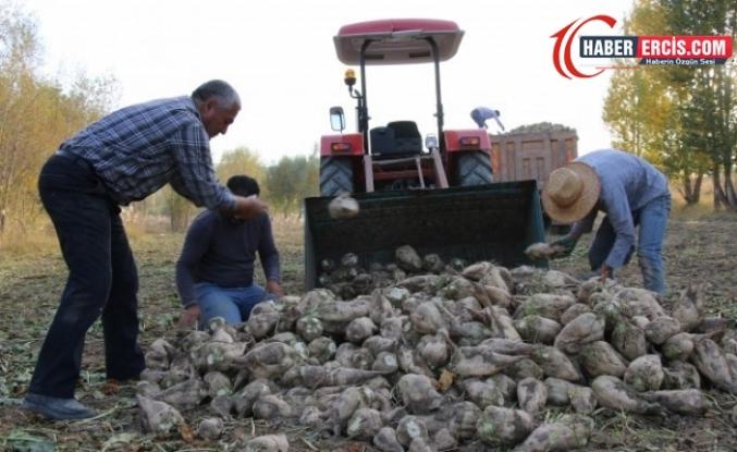 Erciş'te şeker pancarı yetiştiricisi kota ve su mağduru