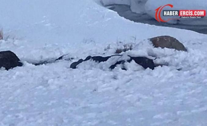 Van'da sınırda donmuş cenaze bulundu