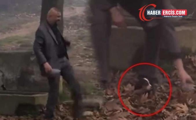 Yavru köpeğe işkence teşhir oldu, görüntüler kaldırıldı