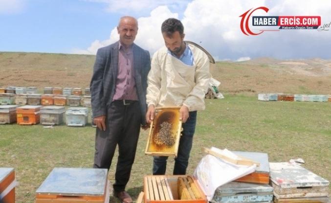 Van'da Kuraklık bal üretimini etkiliyor