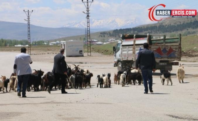 Van'da Yüksek maliyet hayvancılığı bitiriyor