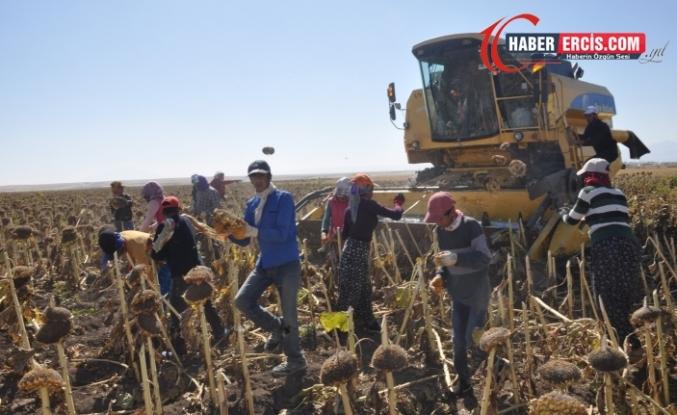 Yerli çiftçi borç içinde yüzerken Arjantinli çiftçiye 250 milyon lira harcandı