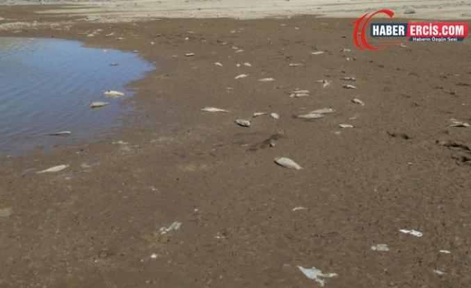 Erciş'te Geliyê Zîlan'da balık ölümleri artıyor